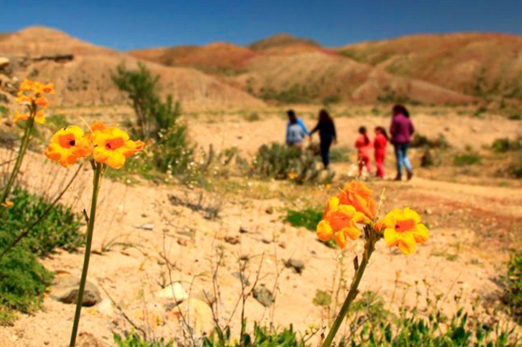 Sernatur prepara oferta turística para el desierto florido