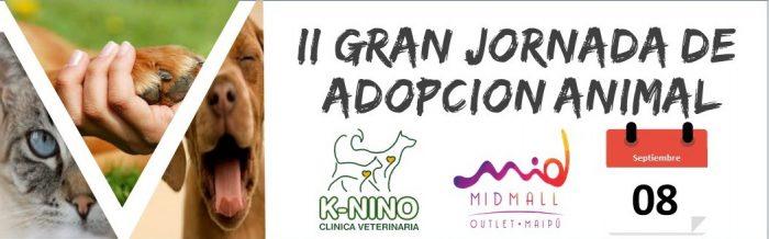 Segunda gran jornada de adopción animal