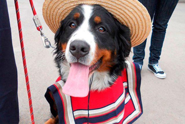 Celebra estas Fiestas Patrias en la Fonda Mascotas Providencia 2017