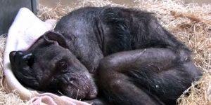 animales201001