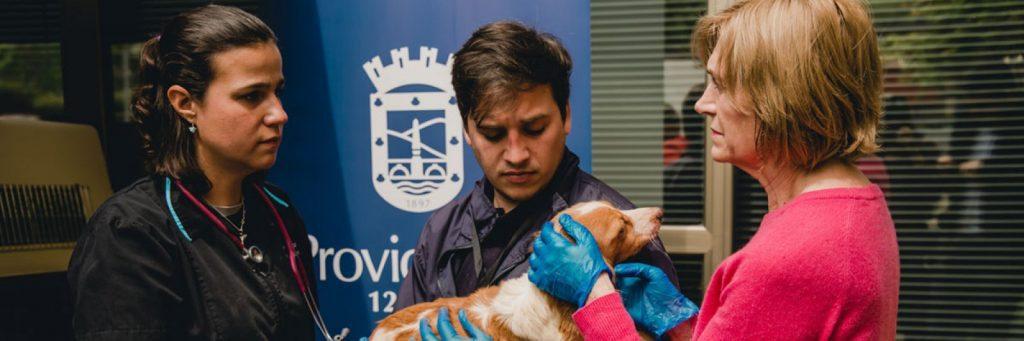 Municipalidad de Providencia rescata 12 perros abandonados en departamento