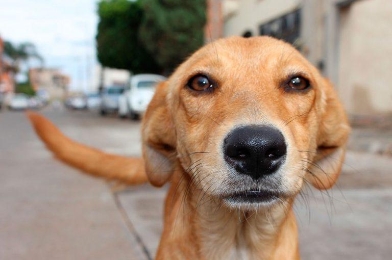 5 excelentes razones para adoptar una mascota