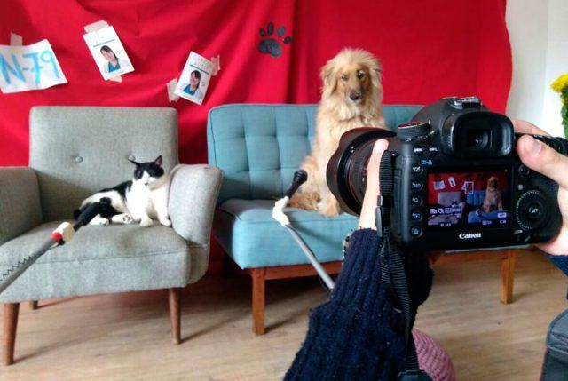 La historia Bruno y Jacinta: Las mascotas que protagonizan la campaña a diputada de su dueña