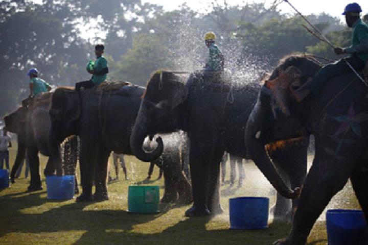 Comenzó el XIV Festival del Elefante en Nepal