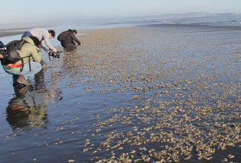 Rechazan demanda ambiental por vertimiento de salmones muertos en Chiloé