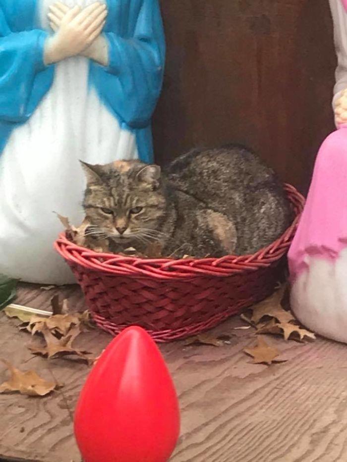 grumpy-cat-manger-brooke-goldman-2-5a27a443c3aae__700