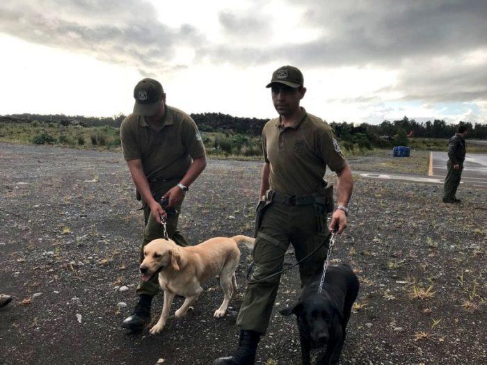 Llegada a aeródromo de Chaitén de equipo canino de rescate y otros materiales (@intendencialos1).