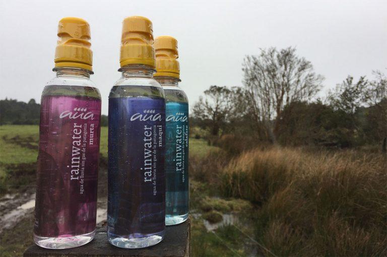 Lluvia sureña y berries nativos se unen para dar vida a bebida funcional rica en antioxidantes