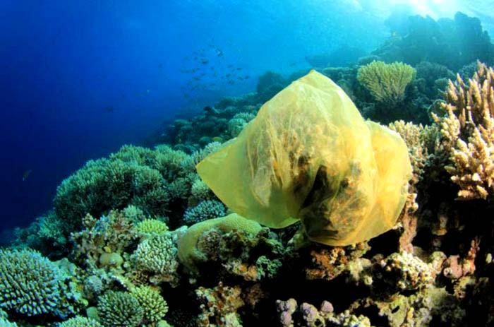 Los arrecifes de coral en grave riesgo de morir por el plástico