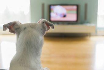 ¿Pueden los perros ver televisión?