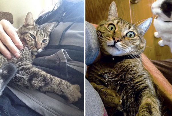 This-cats-reaction-to-its-owners-death-is-the-cutest-thing-youll-see-today-5a8e9421d7bc7__880