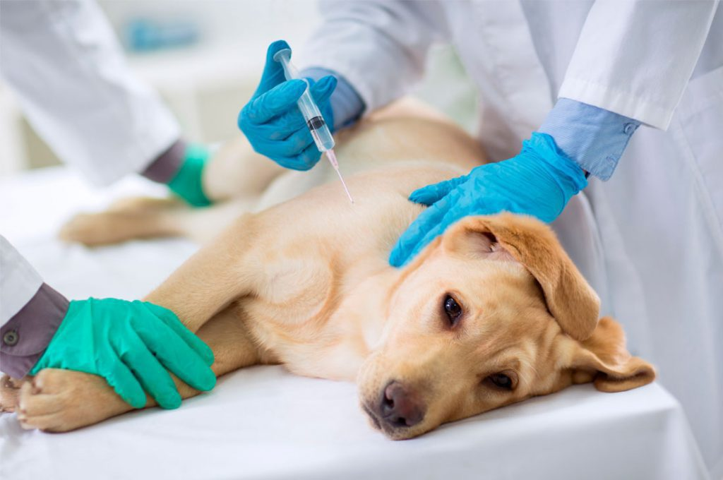 Todo lo que debes saber sobre las vacunas para tus mascotas