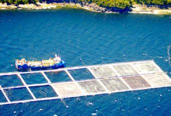 Los estragos que provoca la Marea Roja: Hasta ahora 24.500 toneladas de salmones muertos
