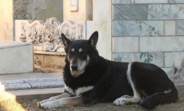 """Murió """"Capitán"""", el perro que estuvo por once años junto a la tumba de su amo"""