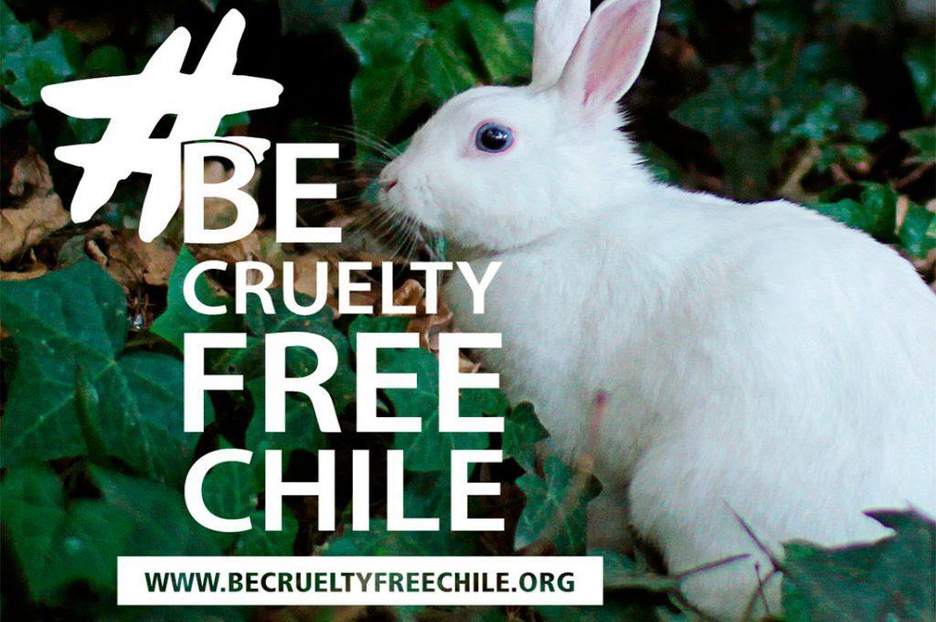 Be Cruelty Free Chile quiere prohibir el testeo de animales en la cosmética