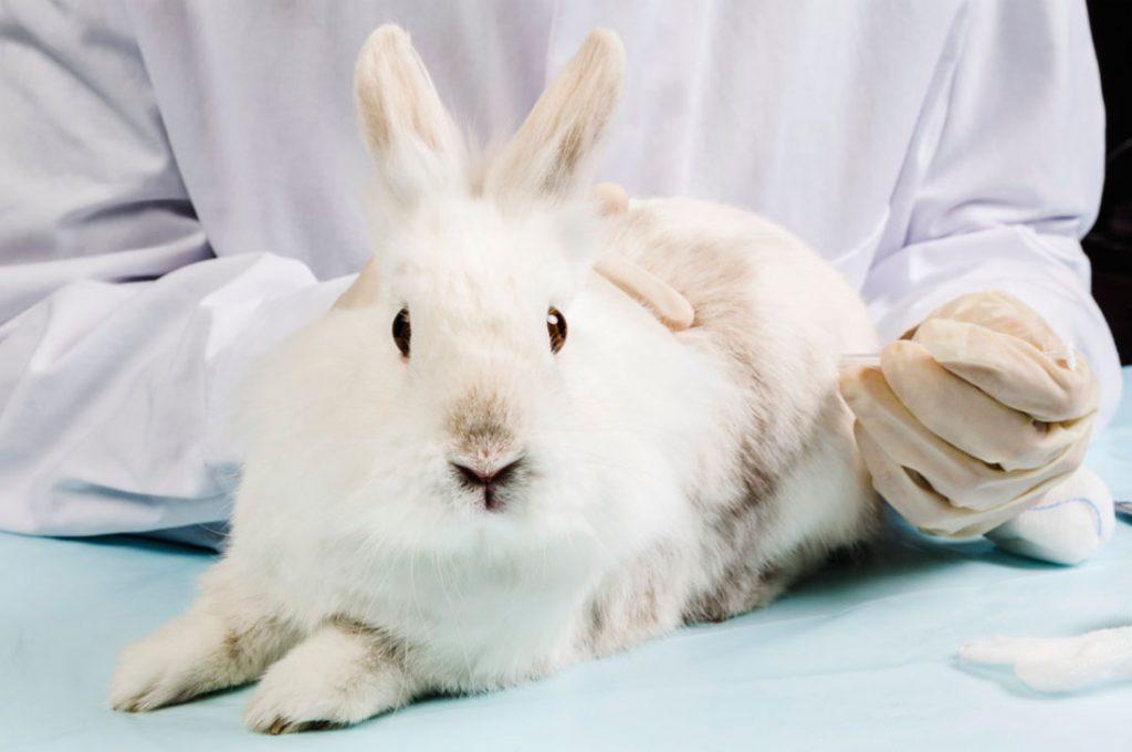 78% de los chilenos desaprueba pruebas con animales en la industria cosmética