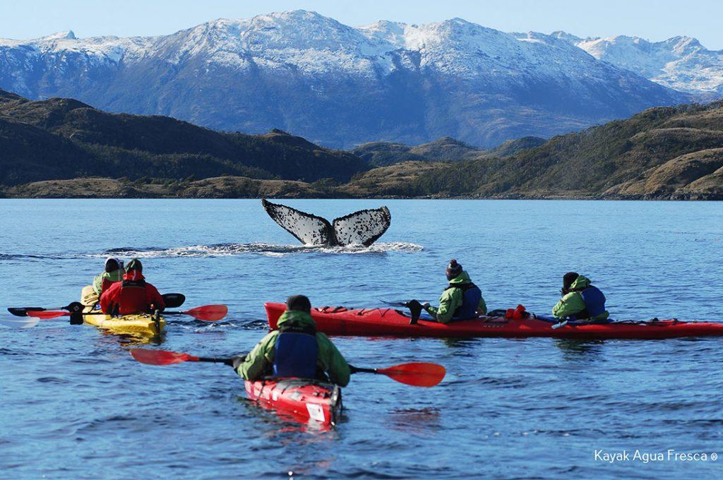 Nuevos horizontes enfrentan el turismo en Punta Arenas tras éxito en Fitur