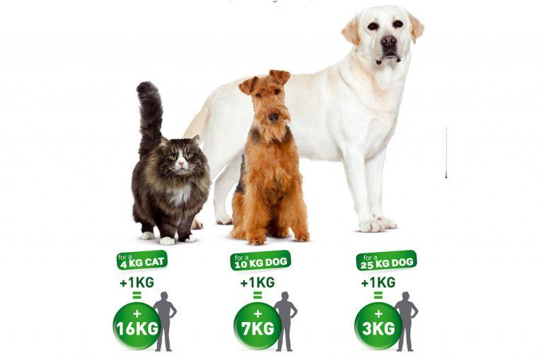 Kilo de sobrepeso en animales no es el mismo equivalente que el de las personas