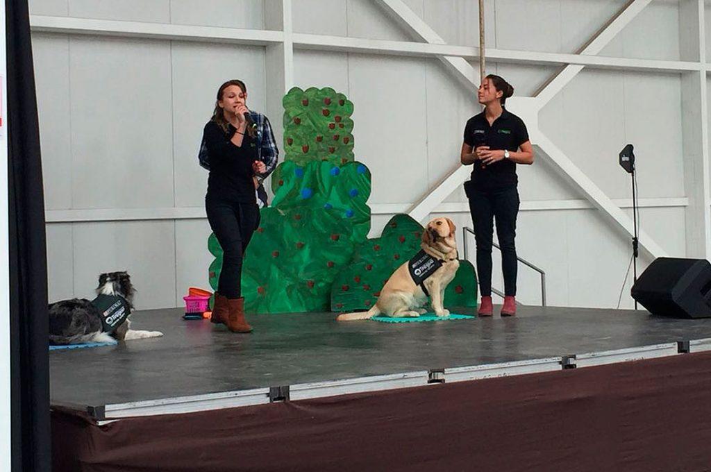 Innovador programa de educación para la tenencia responsable de mascotas
