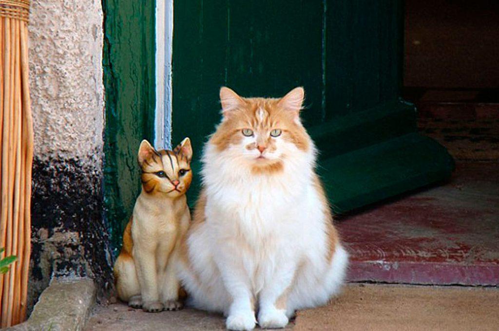 Este gato puede que sea el más viejo del mundo