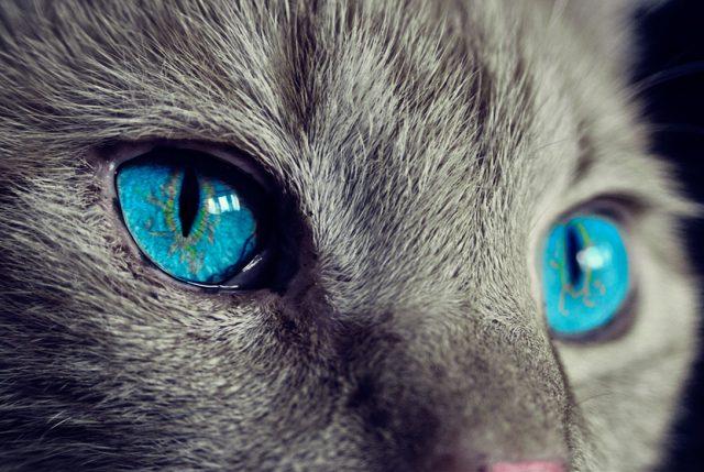 Ven a conocer los gatos más lindos de sudamerica en la Expo Gatos