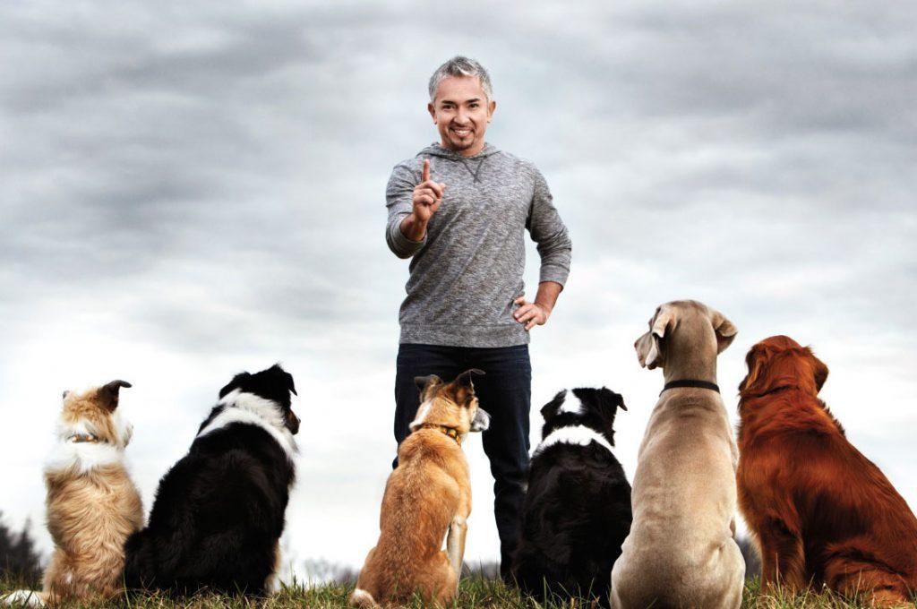"""Los dichos del """"Encantador de Perros"""" que no dejaron contentos a los amantes de los perros"""