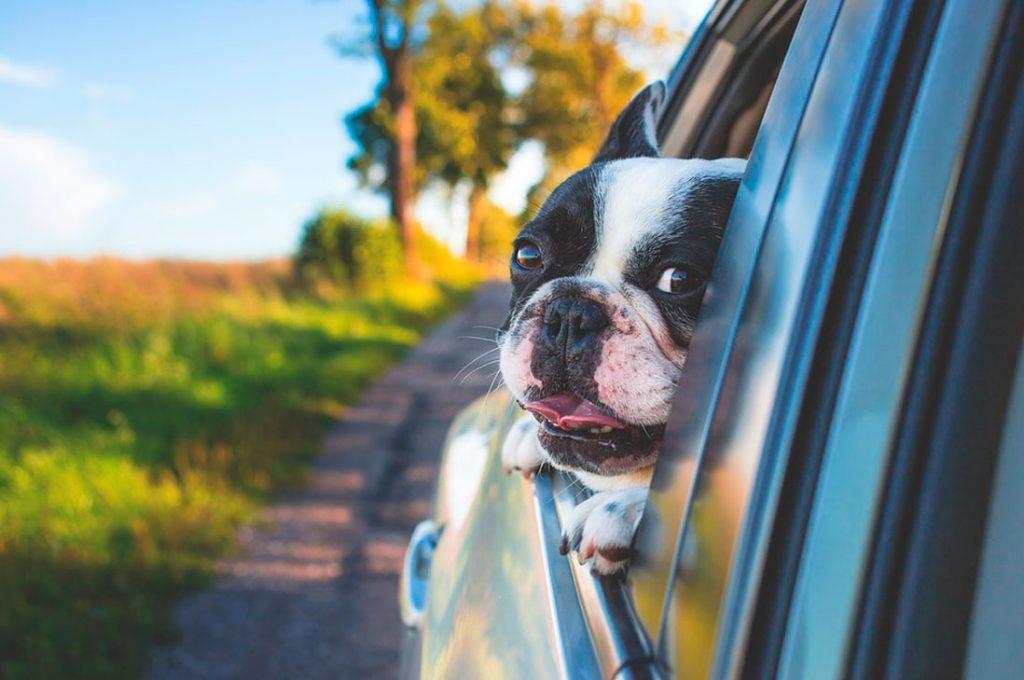 Mascotas en la era digital: lo que podemos hacer para mantenerlas seguras
