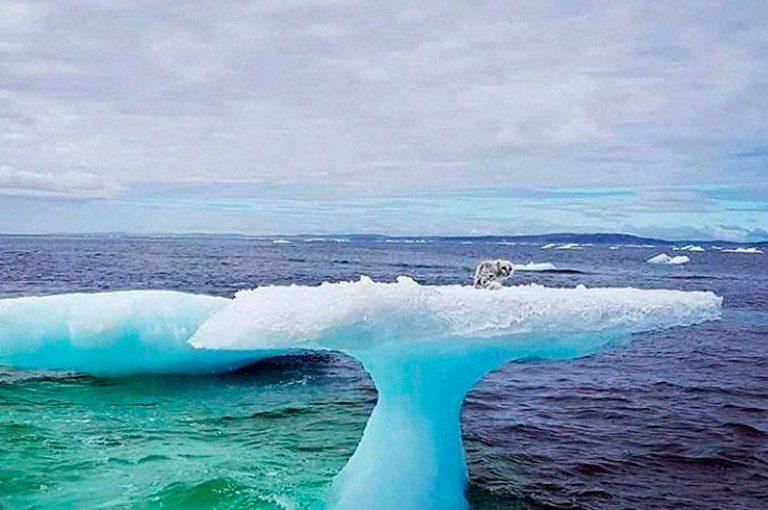 Zorro ártico es rescatado desde un iceberg a la deriva