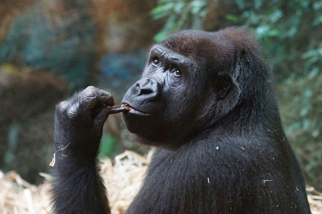 Empleada de un zoologico revela los datos más interesantes de los animales