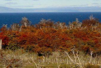 SEA revierte decisión y autoriza uso de tronaduras en mina de Isla Riesco en Magallanes
