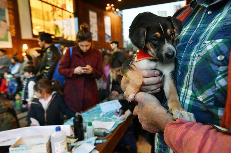 Nueva jornada de adopción de mascotas en GAM