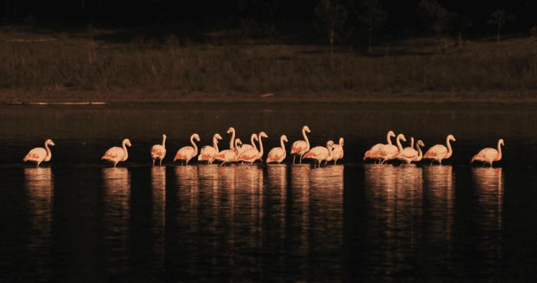 Reserva Nacional El Yali de Santo Domingo: 1.449 aves son censadas por CONAF