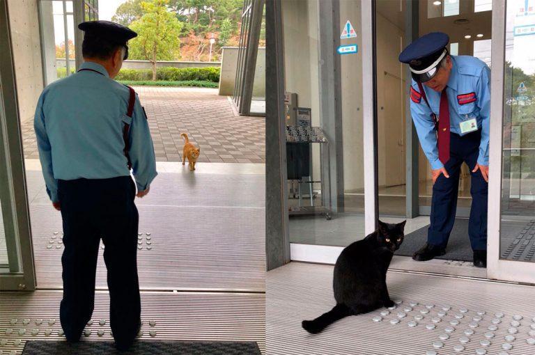 Dos simpáticos gatos llevan años tratando de colarse en un museo de Japón