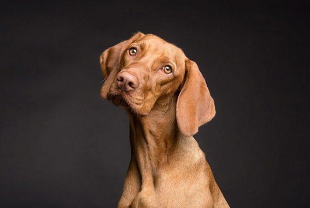 Perrut: Emprendimiento chileno que busca a tu perro en forma eficaz en caso de pérdida