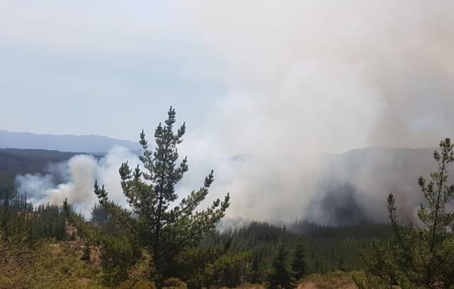 Onemi declara Alerta Roja para la comuna de Paredones por incendios forestales