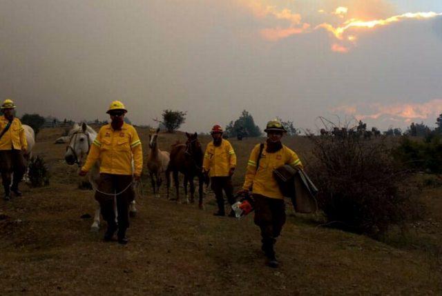 ONEMI informa que incendios forestales en Cochrane, Patagonia Chilena, se han quemado  15mil 145 hectáreas