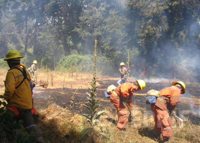 Intendencia de Los Ríos presenta nuevas querellas por incendios forestales