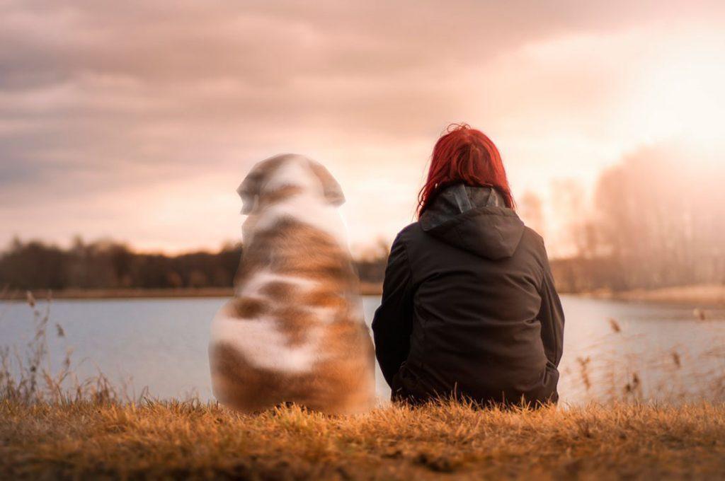 La muerte de tu mascota puede causar más dolor que perder un familiar