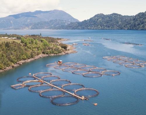 Girardi acusa lobby de reyes de Noruega para aprobar salmoneras en reserva de Cabo de Hornos