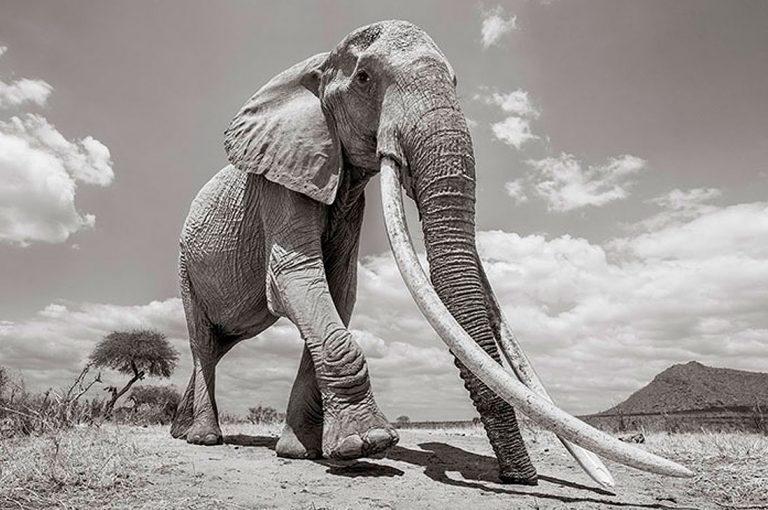 """Las últimas fotos de la legendaria """"Reina Elefante"""" antes de su muerte"""
