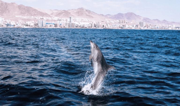 Subsecretaría de Pesca presenta denuncia criminal por matanza de delfines en Antofagasta
