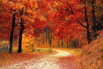 Los mejores consejos para fotografiar los colores intensos del otoño