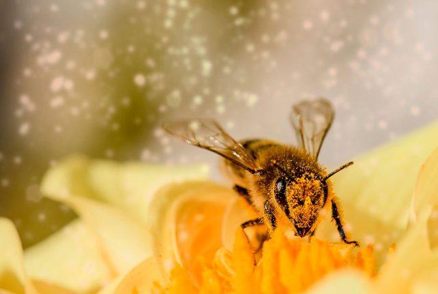 Pequeñas acciones para ayudar a las abejas a sobrevivir
