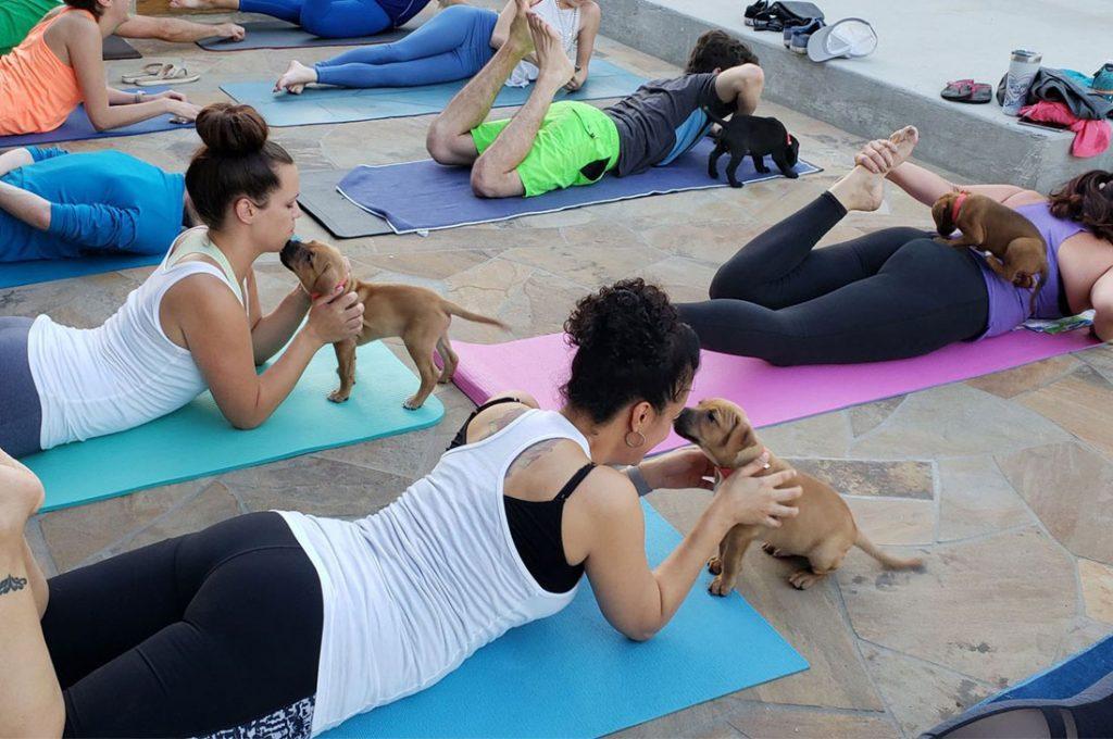 Whole Earth Farms realizará sesión de canoterapia con perros que además hacen yoga