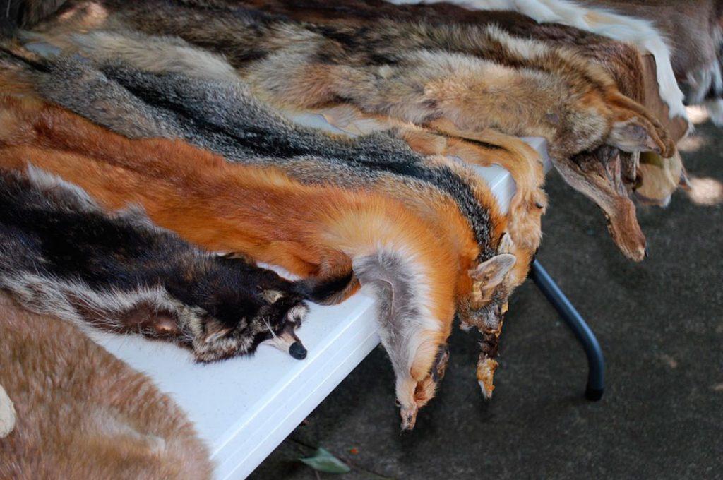 Nueva York podría convertirse en la próxima ciudad en prohibir la venta de pieles animales