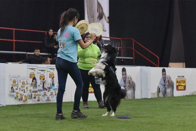 Expo Mascotas & Animales está pronta a inaugurar su novena versión