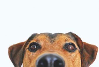 10 cosas que no debes hacerle jamás a tu perro