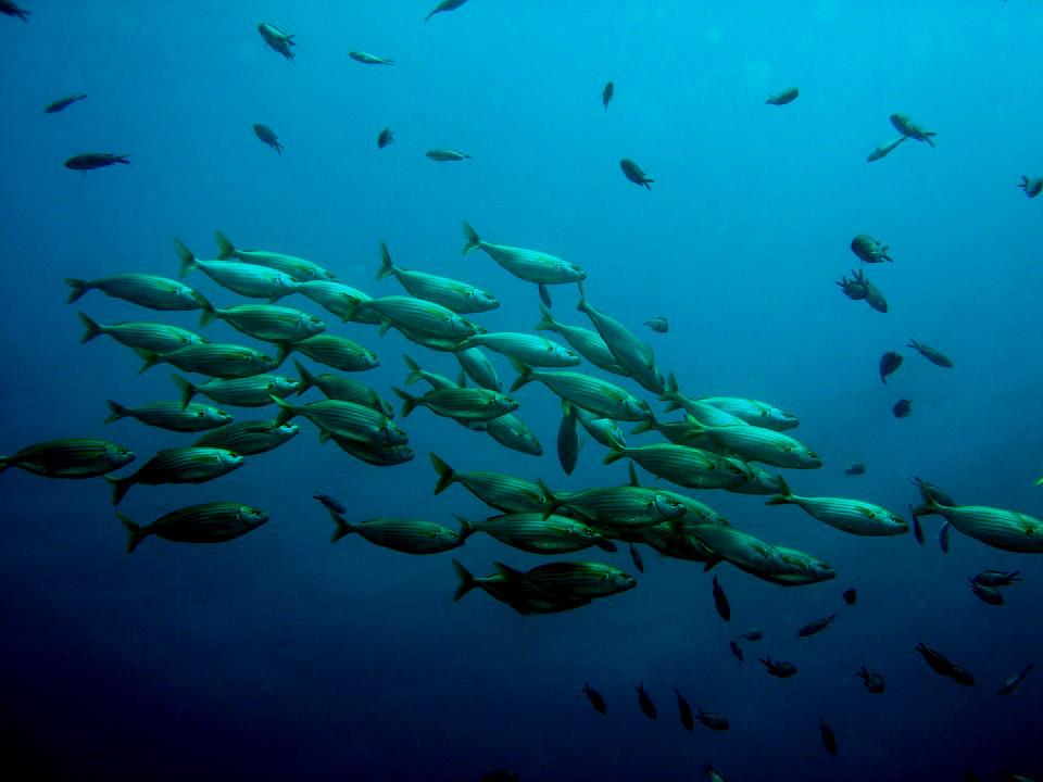 Calentamiento global reducirá fauna marina en cerca de 17% revela estudio publicado en PNAS