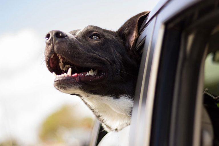 Todo lo que debes saber si tienes pensado viajar con tu perro