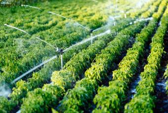 Sin consideración por el consumo humano: Gremios golpean la mesa y pagan millonaria inserción reclamando por nuevo Código de Aguas